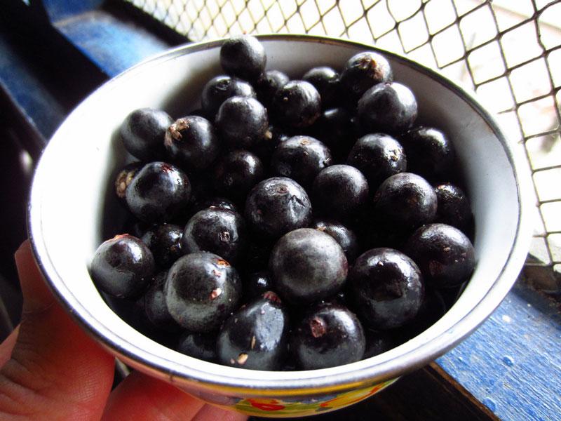 Acai Berry Organic